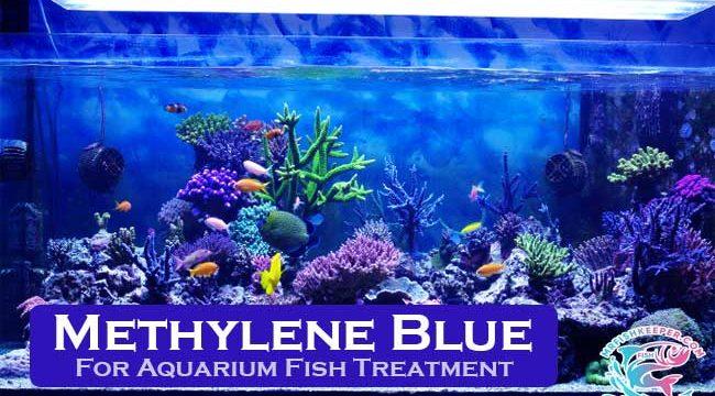 How to Treat Fish Tank using Methylene Blue?