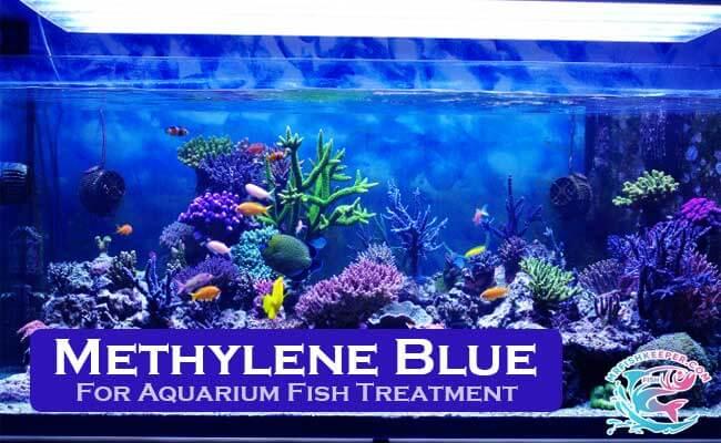 Methylene Blue For Fish Treatment