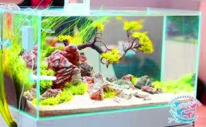 Small fish tank for babies
