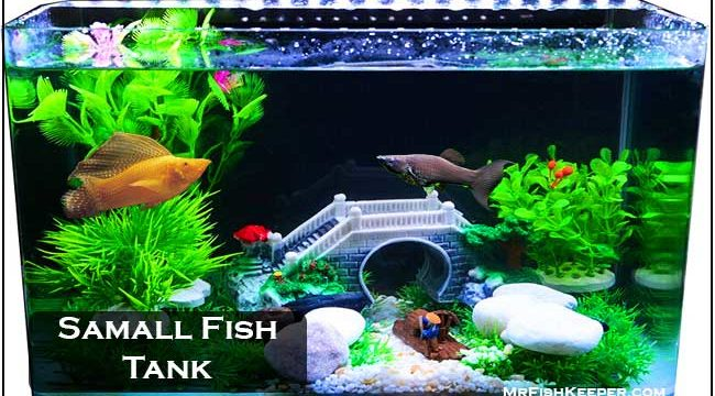 Good or Bad: Small Tank Setup or Bowl For Mollies?