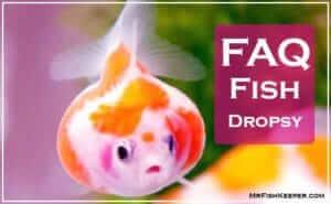 FAQ Fish Dropsy