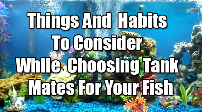 Things and Habits to Consider while Choosing Tank Mates