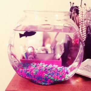 Fish Bowl for mollies