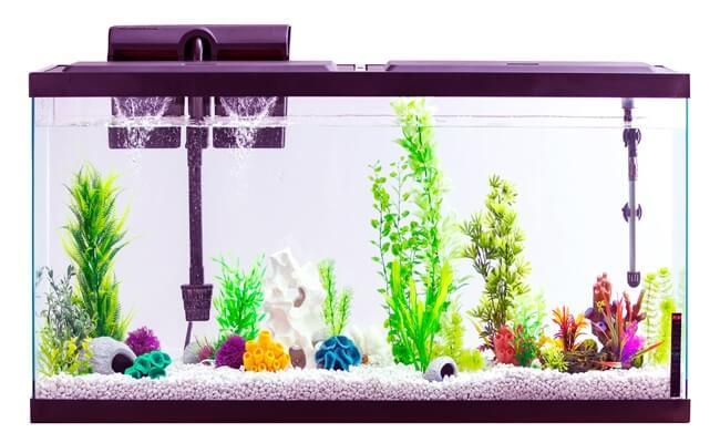 Fish tank for Healthy Aquarium Fish