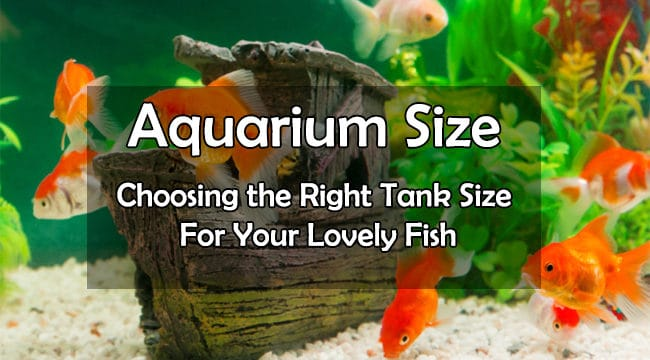 Aquarium Sizes – A Healthy Guide For All The Fish Owners