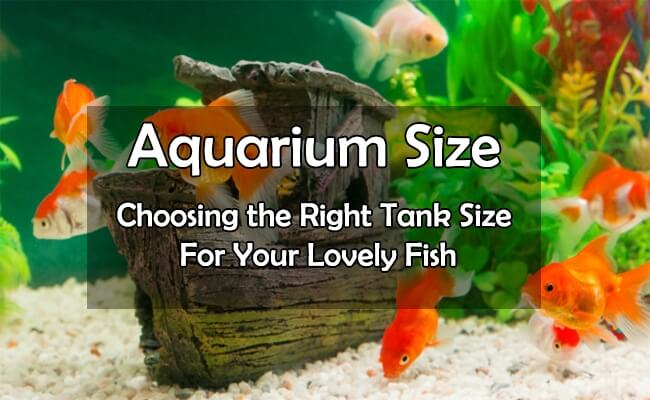 Standard Aquarium Sizes | Tank Dimensions,Length, Width, Height & Weights