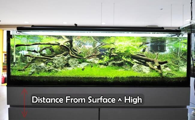 Height Of Fish tank from Ground