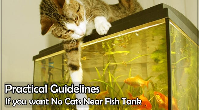 How to Keep Cats away From Your Fish Aquarium | 5+ Practical Tips