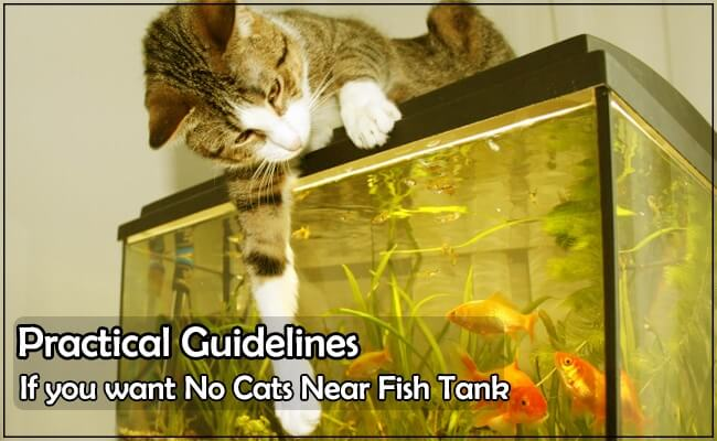 Keep Cats away From Your Fish Aquarium