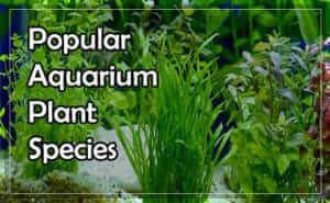 List of 11 Popular Aquarium Plant Species for Your Tank