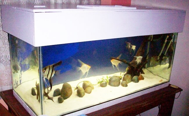 aquarium covered with hood or lid