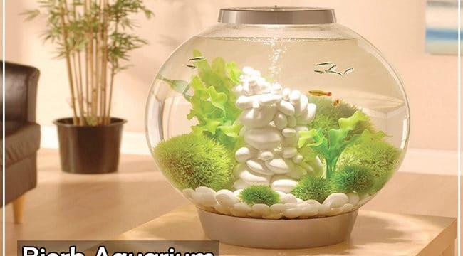 Why Should You Choose a Biorb Fish Aquarium? [Untold Reasons]