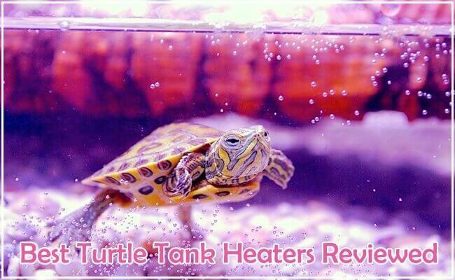 Best Turtle Tank Heater Reviewed