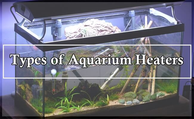 6 Aquarium Heaters Types By Placement and Working