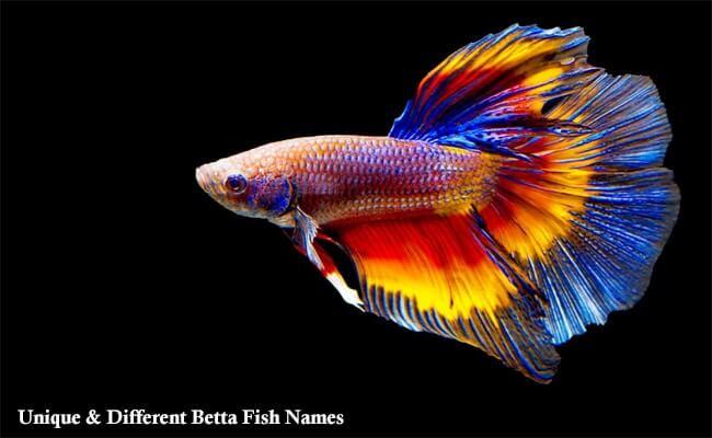 Unique and Different Betta Fish Names