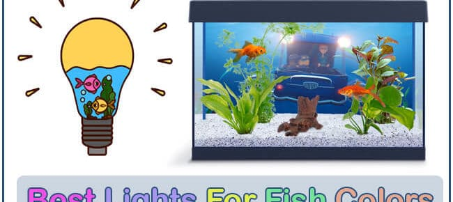 Best Aquarium Lighting for Fish Color – Light Vs Fish Colors