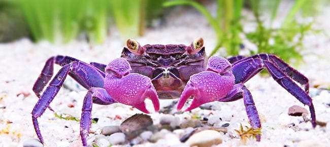 Why You Should Keep Crabs In Your Fish Aquarium? 2020