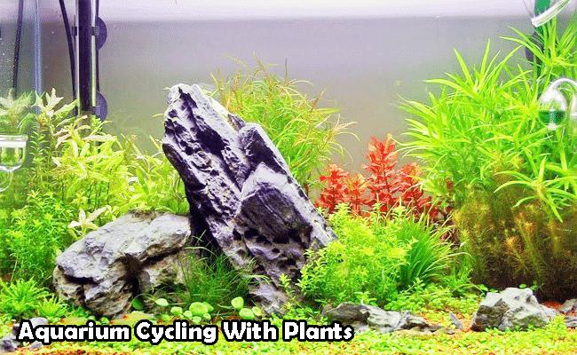Aquarium Cycling with Plants