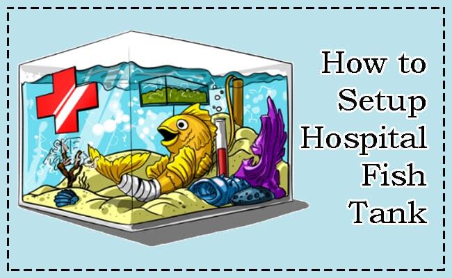 Quarantine Tank aka Hospital Tank
