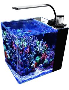 GankPike 8 Gallon Saltwater Aquarium Marine Fish Tank